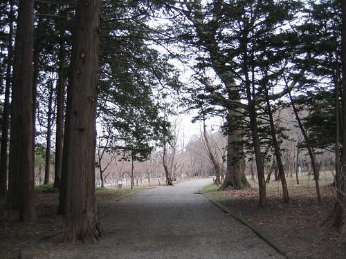 圓山公園很多樹^^