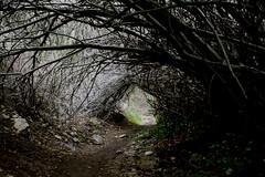 Holy Jim Trail - Entrance (My Standard Break From Life) Tags: shadow path branches jim hike holy trail overhead dense thicket holyjimtrail beginnerdigitalphotographychallengewinner