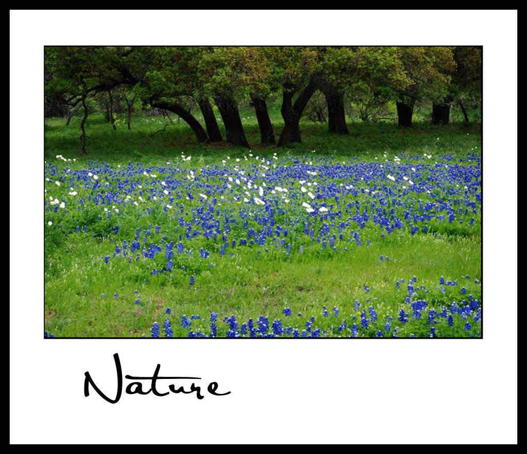 Nature_Neil E 01