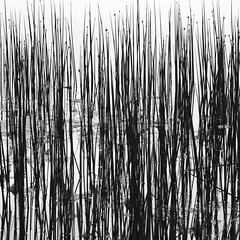 reed!!!!! (limerickdoyle) Tags: blackandwhite lake reflection reed water efs1785mm canon400d