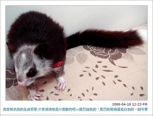 我家可愛的新寵物2.jpg