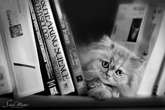 ...!!    (SaRa Meow  .. / @sosoMeow) Tags: pets white black cute face cat reading eyes kitten sad kitty books science meow sarameow