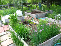 old raised beds