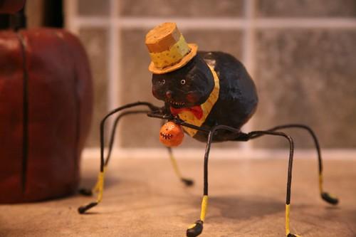 Friendly Spider