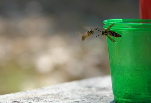 Bees Like Orange Juice