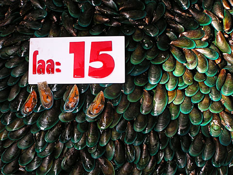 nonthaburi_mussels