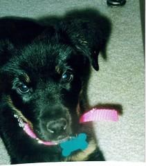 Baby Nellie 2