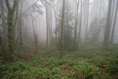 Stopped to Trouble You for the Time (Mark Griffith) Tags: trees fog washington hiking hike ferns issaquah tigermountain swordfern issaquahalps licoricefern poopoopointtrail