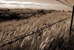 On the other side of the fence... (peace1374) Tags: tag3 taggedout nikon tag2 tag1 bigisland d80 kawaihaeroad peace1374