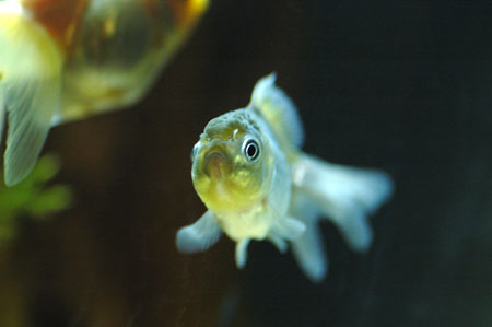 goldfish_03.jpg