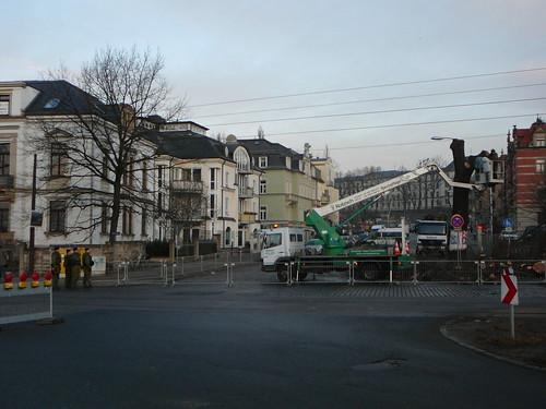 Baumfällarbeiten an der Bautzner Straße (06)