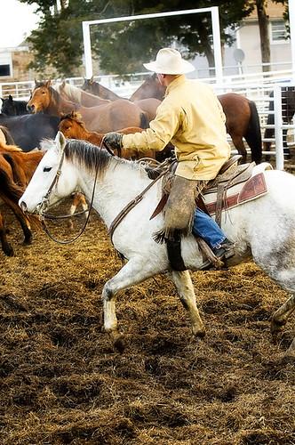 gathering mares 211