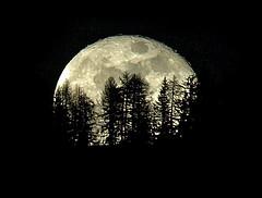 Moon, Moon, make my dreams come true.. (steve_steady64) Tags: trees italy moon black tree alberi night mond reflex nightshot olympus luna lua nero notte trentino dolomiti 月 buwan folgarida 月亮 zd mahina قمر 달 zuikodigital mywinners mywinner abigfave stevegatto ©stevegatto พระจันทร์ flickrplatinum isawyoufirst wowiekazowie theunforgettablepictures thatsclassy platinumheartaward simplysuperb goldstaraward 200mmed