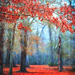 passionate earth (slight clutter) Tags: park morning trees red mist leaves fog bravo texas branches houston iloveflickr slightclutter katyahorner slightclutterphotography