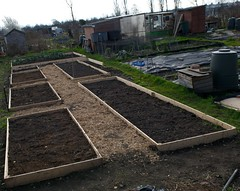 Allotments in Chiswick
