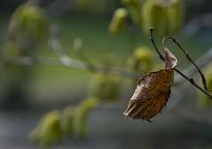 Old and New (sjnewton) Tags: uk england kewgardens london nature kew nikon richmond surrey forms february 2008 royalbotanicgardens naturalforms lfm londonflickrmeetups 18200mmf3556gvr d80 upcoming:event=434848 tw93ab