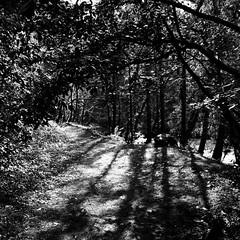 among shadows (limerickdoyle) Tags: wood trees forest shadows walk newport tipperary limerick clareglens canon400d efs178mm