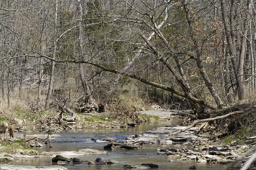 Creek With Tree