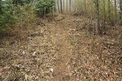 赤鞍ヶ岳の刈られた藪の道
