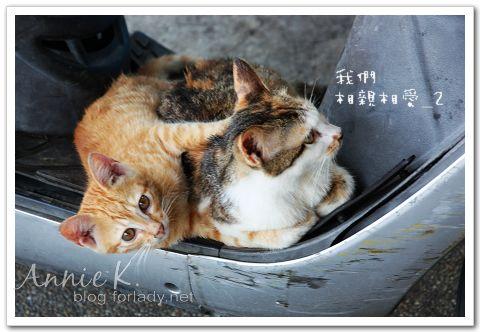 平溪線貓2
