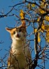 funny cat in tree picture (Br0m) Tags: blue autumn trees pet cats tree oslo cat observation funny haha 2007 brom canonef55200 piratetreasure canoneos400d pixelthecat piratetreasure2 piratetreasure3