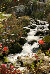 Triberg Stream (seven years) Tags: flowers orange black nature forest canon germany rocks stream freiburg triberg 400d