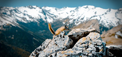 Grand Chipmunk (Simple Insomnia) Tags: park trees snow mountains forest trekking trek outdoors washington squirrel state hiking grand hike deer ridge trail national olympic peninsula