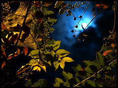 Tree at Night (Fernando X. Sanchez) Tags: blue moon tree green fall nature colors night contrast leaf autum florida gimp vivid olympus explore fernando tallahassee fabulous sanchez warmcolors e500 coldcolors top500 fernandosanchez