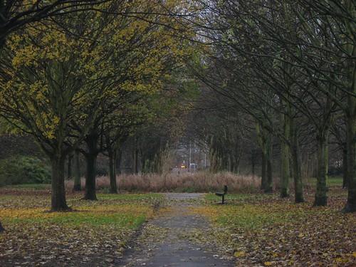Alexandra Park - November 2007