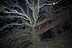 scary forest 1 (aardvark.) Tags: australia tasmania tas tassie