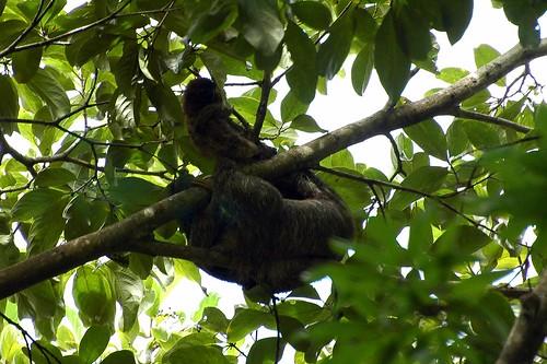 sloth n baby