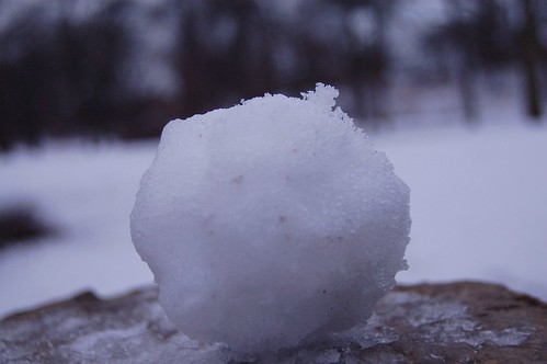 My Snowball Close-Up