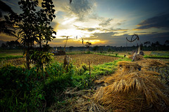 Around Ubud - Bali (Aur from Paris) Tags: travel sunset bali tree nature water colors clouds indonesia landscape bravo asia rice terraces fields asie ricefields indonesie paddyfields ubud canoneos5d digitalblending aur fineartphotos diamondclassphotographer