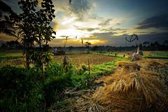 Around Ubud - Bali (Aur from Paris) Tags: travel sunset bali tree nature water colors clouds indonesia landscape bravo asia rice terraces fields asie ricefields indonesie paddyfields ubud canoneos5d digitalblending aur fineartphotos diamondclassphotographer