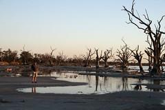 Lake Bonney (Caroline-on-Murray) Tags: southaustralia barmera lakebonney