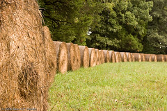 Hay Bales in a Row (BACHarbin) Tags: trees usa brown green rain fog forest personal straw va manassas fields grasses hay raining haybales fogbank manassasnationalbattlefieldpark submittedtophotoshelter