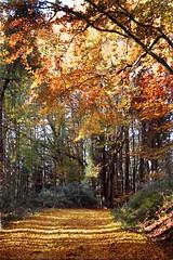 immagine raffigurante un sentiero nel bosco in autunno