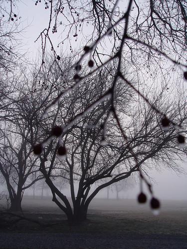 tree:fog