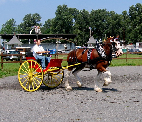 Draft horse show at the Trumansburg Fair