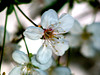 DSC00846 (Sherwan™) Tags: flower macro nature spring flickr sony erbil kurdistan watcher kurd sherwan irbil کوردستان flickrestrellas dcrsr300e
