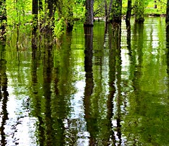 trails of colour (Kens images) Tags: woods reflections green trees water canon nature park flood art painting