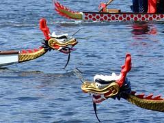 2. Dragonboat-Cup in Borken (4/5) (xmyrxn) Tags: lake race boot see boat dragon head chinese dragons competition boote nrw dragonboat rennen münsterland borken drache chinesisch drachen rudern kopf westfalen wettkampf drachenboot paddeln pröbsting hoxfeld xmyrxn gettyimagesgermanyq1