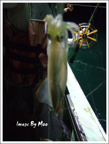 夜釣小管 (8)