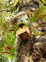 Foxtons sign on empty bird nest