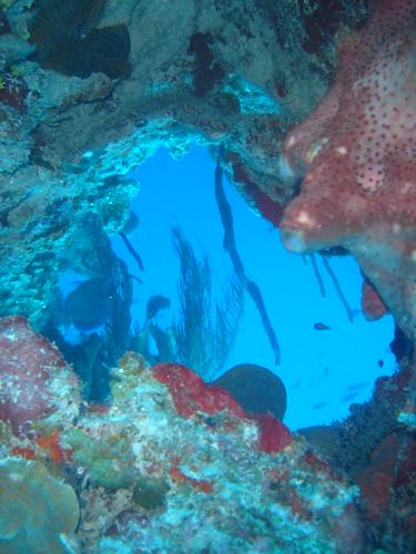 belize blue hole. near The Blue Hole, Belize