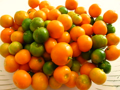 Lemoncito (desertcrops) Tags: colors fruit lemon lemonade citrus sour vitaminc kalamansi calamondin ornamentalplant miniatureorange shekwasha lemoncito colorphotoaward teampilipinas ilovemypic unlimitedphotos