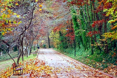 Fall in Hot Springs, AR (edwardleger) Tags: park trees fall leaves edward national arkansas hotsprings 2007 leger supershot grandpromenade aplusphoto colourartaward betterthangood edwardleger exquisiteimage edwardnleger