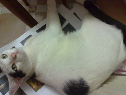 A cat in the lap