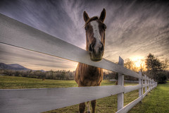 Looking Right at Ya (blakelipthratt) Tags: horse cloud mountain tree grass animal ga fence georgia dynamic bright farm unique sigma brunswick pasture unusual 1020mm hdr dillard evocative scintillating mywinners anawesomeshot impressedbeauty