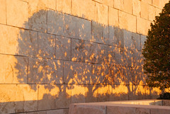 Three Trees Shadows (Peggy_G) Tags: sunset tree wall museum three shadows getty mywinners envyofflickr onlythebestare mykindofpicturegallery